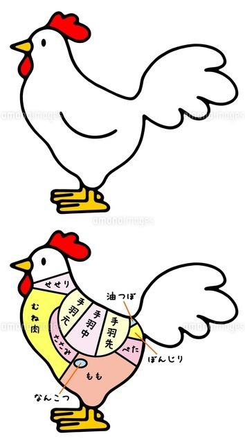 動物と食肉 ニワトリと鶏肉の部位10462000019の写真素材イラスト素材
