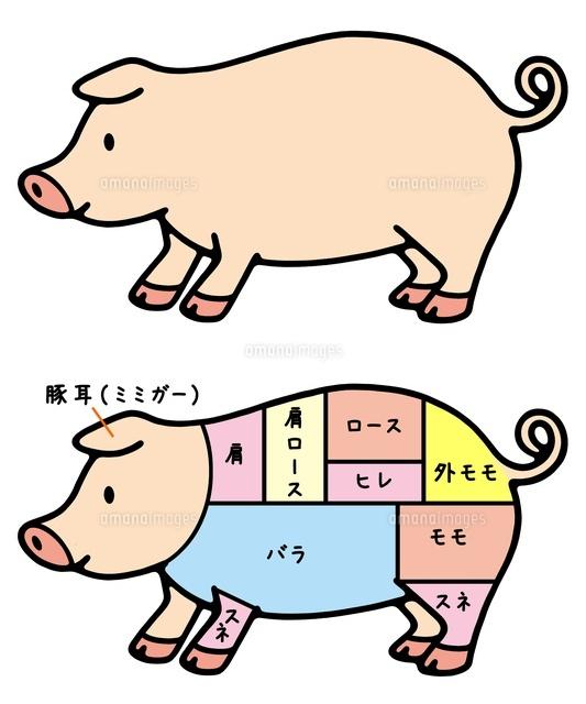 動物と食肉 豚と豚肉の部位10462000020の写真素材イラスト素材