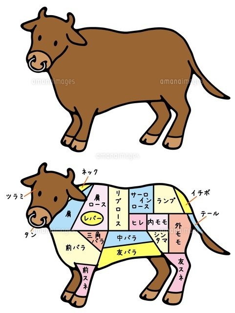 動物と食肉 牛と牛肉の部位10462000021の写真素材イラスト素材