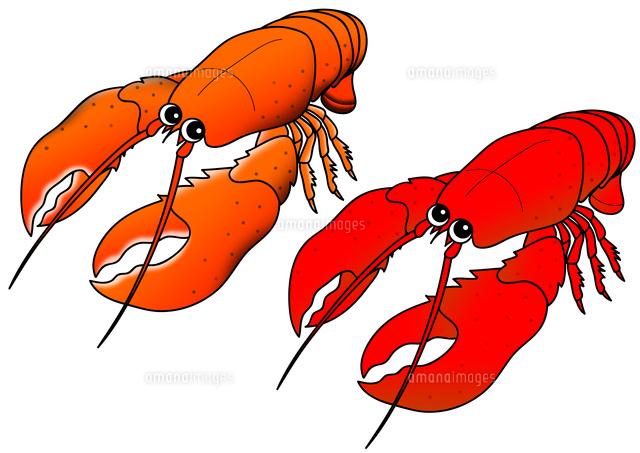 セット アメリカンロブスター オマール海老 の写真素材 イラスト素材 アマナイメージズ