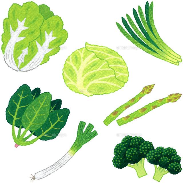 野菜葉茎菜類10514000068の写真素材イラスト素材アマナイメージズ