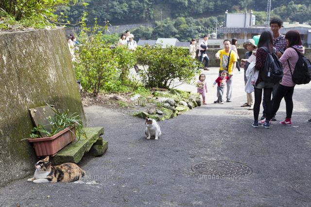 台湾猫村の坂道10583006361の写真素材イラスト素材アマナイメージズ