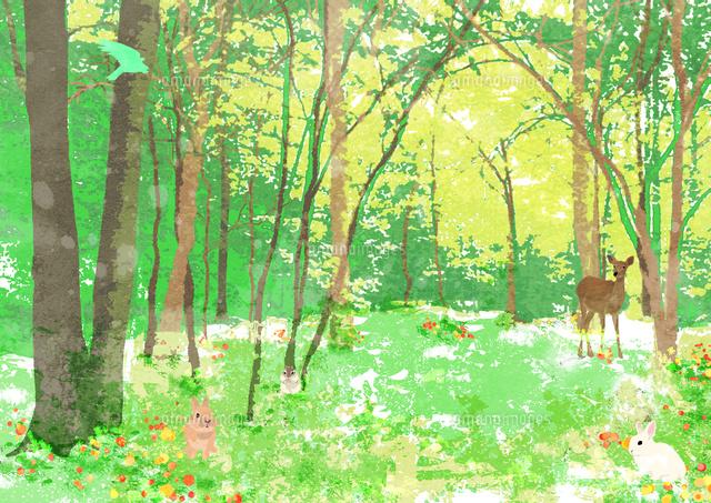 春の森の中10672000045の写真素材イラスト素材アマナイメージズ