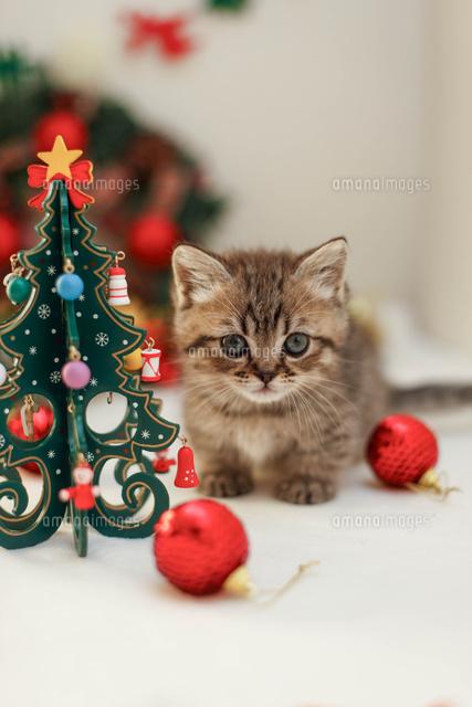 クリスマスと子ねこ10693000152の写真素材イラスト素材アマナ