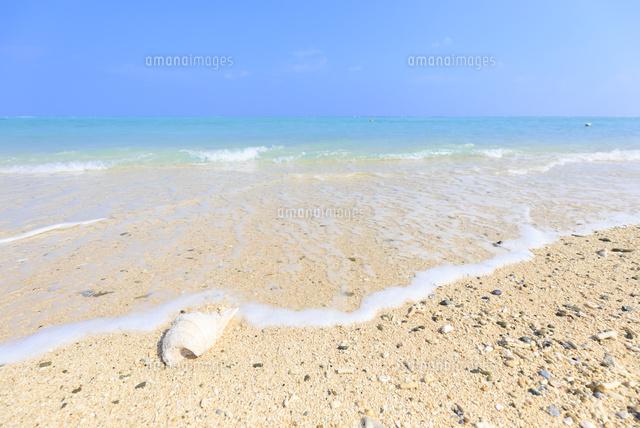 波打ち際の白い貝殻10696000490の写真素材イラスト素材アマナ