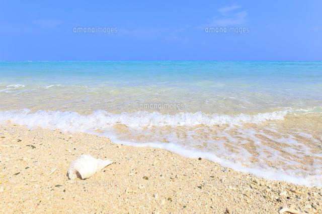 波打ち際の白い貝殻10696001963の写真素材イラスト素材アマナ