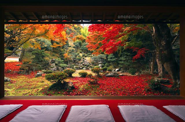 11月 紅葉の徳源院 近江の秋景色 の写真素材 イラスト素材 アマナイメージズ