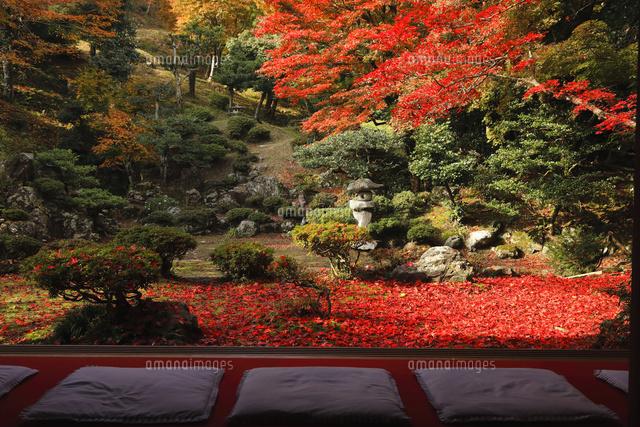 11月 紅葉の徳源院 滋賀の秋景色 の写真素材 イラスト素材 アマナイメージズ