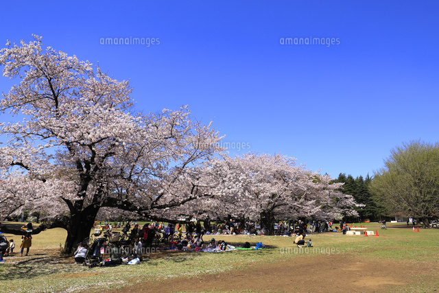 光が丘公園