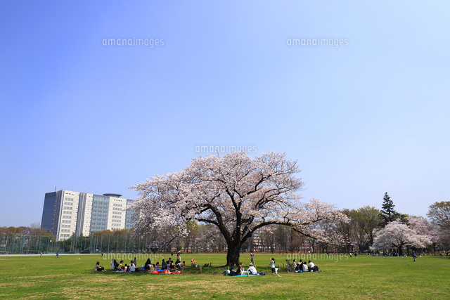 武蔵野中央公園