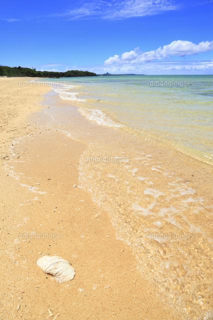 具志堅ビーチ 波打ち際に貝殻10769000506の写真素材イラスト素材