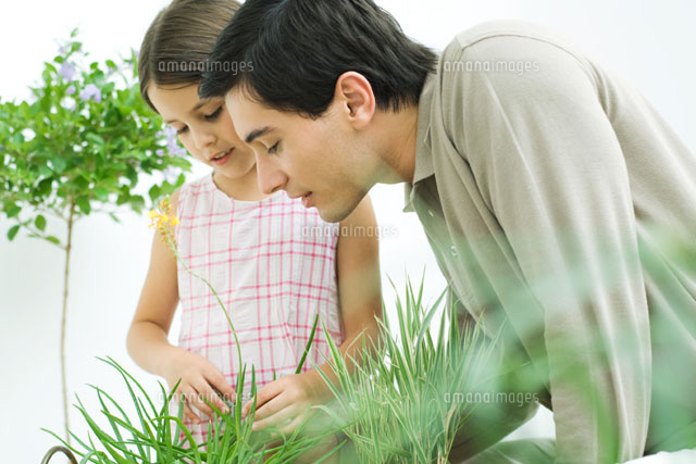 Father and little girl touching plants together