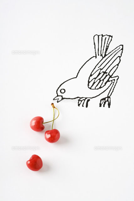 Ripe cherries and drawing of bird