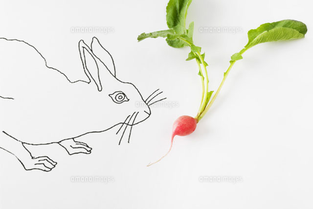 Drawing of rabbit smelling fresh radish