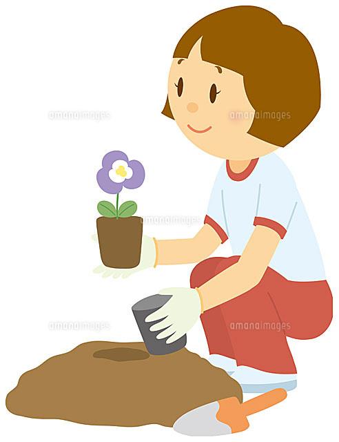 花を植える女子中学生11002055114の写真素材イラスト素材アマナ