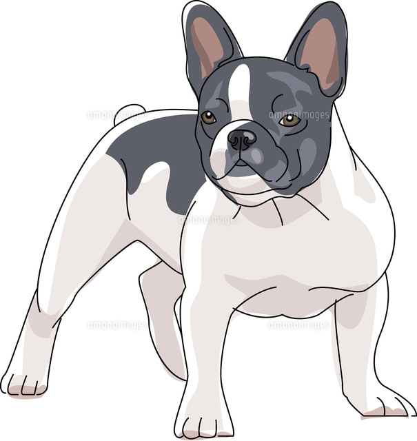犬 フレンチブルドッグ11002068632の写真素材イラスト素材アマナ