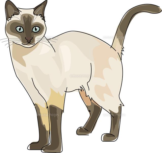 猫 シャム11002068646の写真素材イラスト素材アマナイメージズ