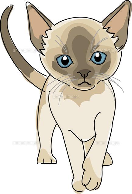 猫 シャム11002068647の写真素材イラスト素材アマナイメージズ