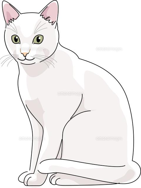 猫 日本猫 白11002068702の写真素材イラスト素材アマナイメージズ