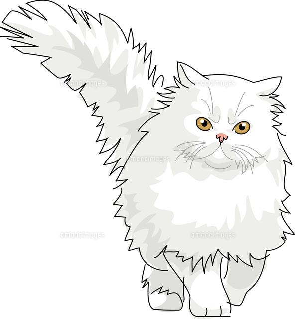 猫 ペルシャ