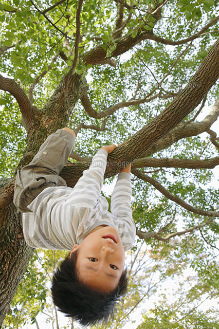 木登りする男の子11004070539の写真素材イラスト素材アマナイメージズ