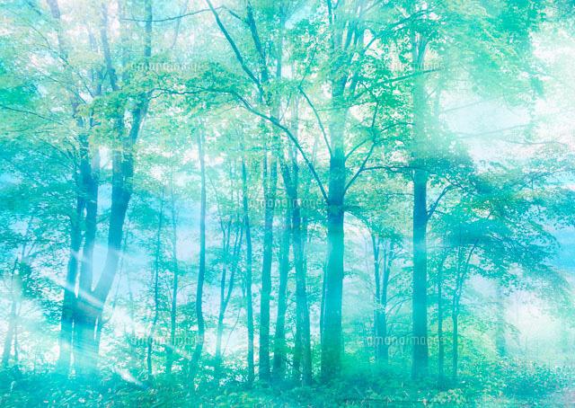 新緑の森と木漏れ日11007034141の写真素材イラスト素材アマナ