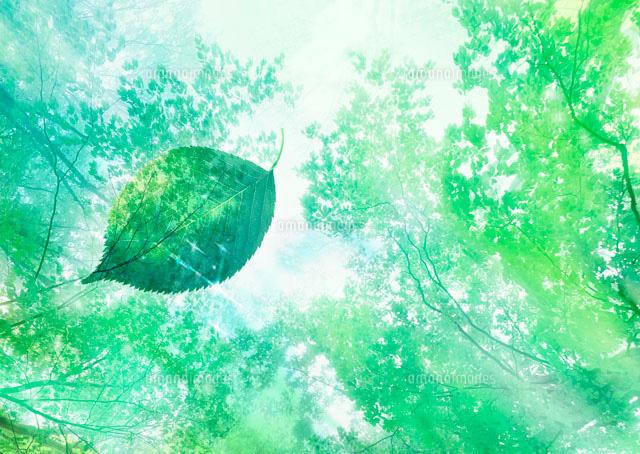 新緑の森と木漏れ日11007034166の写真素材イラスト素材アマナ