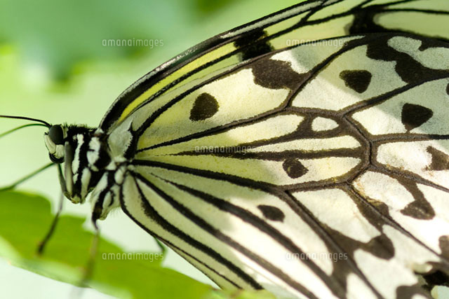 Marbled white butterfly on plant