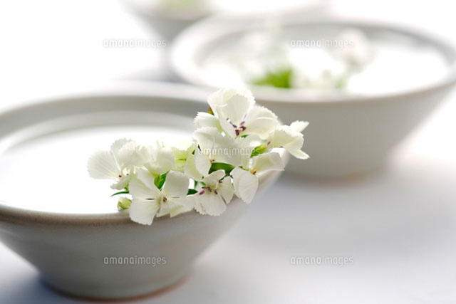 White azaleas on two bowls of water