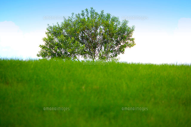 Single tree growing on green field