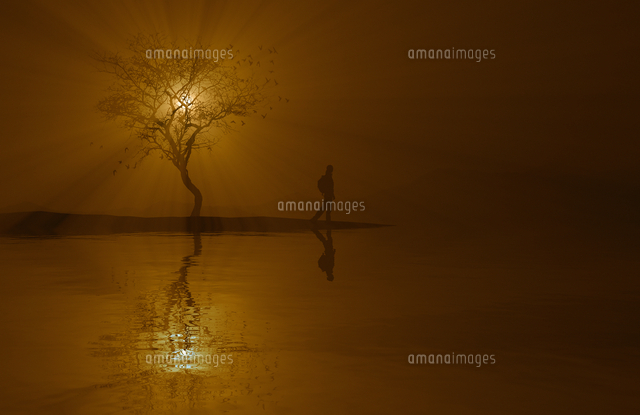 Silhouette of woman and tree near river at sunset