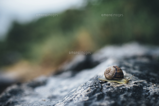 Close up of snail on rock