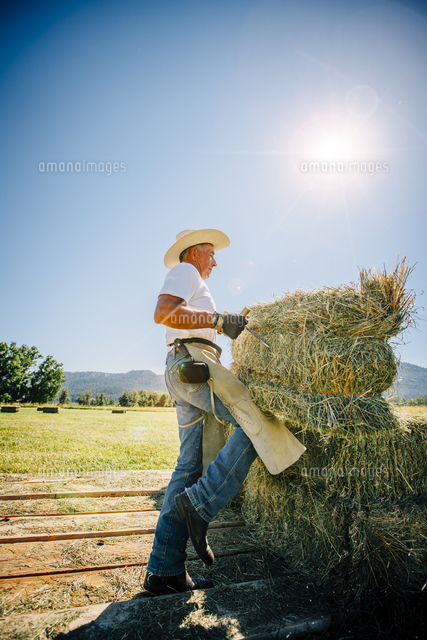 Caucasian farmer lifting bale of hay