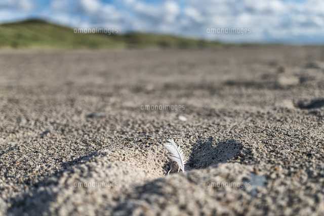 Feather in hole on beach