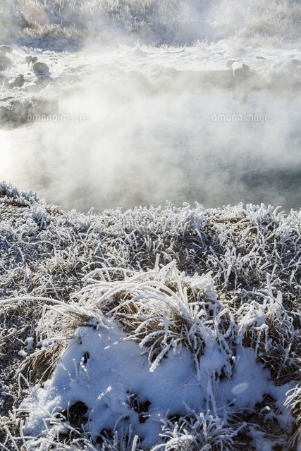 Frost on foliage at steaming hot springs