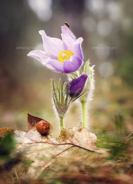 Insect on petal of purple flower