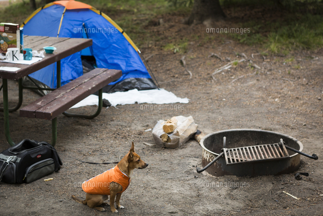 Dog sitting near fire pit at campsite