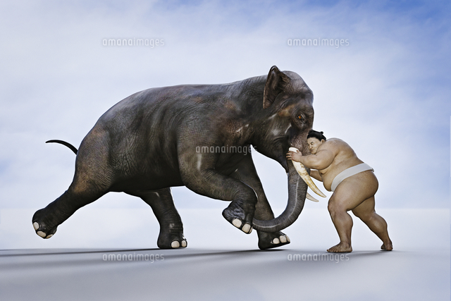 Sumo wrestler fighting elephant