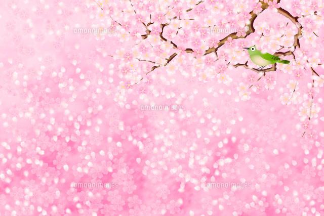 桜 イメージ イラスト