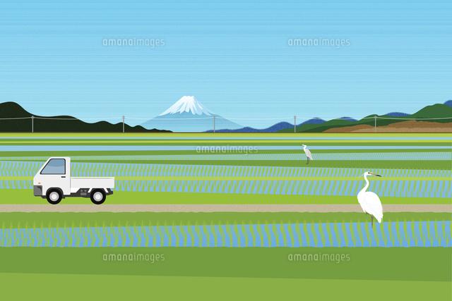 田んぼと富士山 イラスト 11019034050 の写真素材 イラスト素材