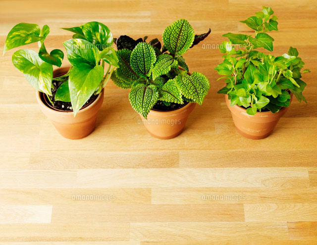 Three Houseplants