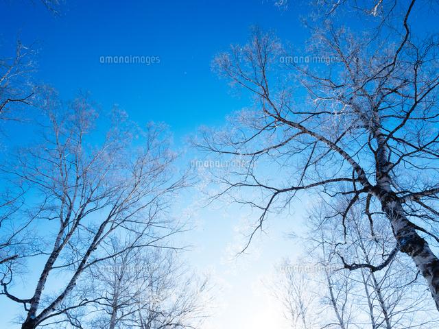 冬の風景11023020598の写真素材イラスト素材アマナイメージズ