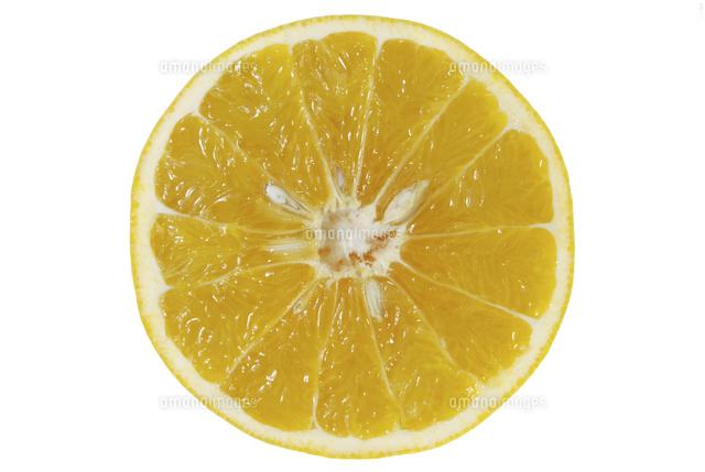 カクテルフルーツ断面11074004187の写真素材イラスト素材アマナ