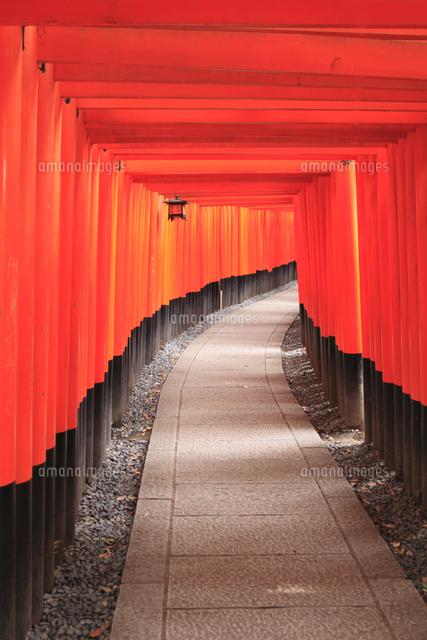 伏見稲荷大社 千本鳥居11076018219の写真素材イラスト素材アマナ