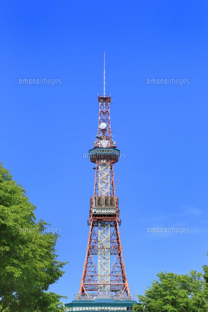 札幌大通公園のさっぽろテレビ塔11076030463の写真素材イラスト素材