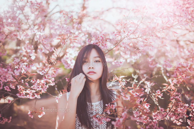 作品番号:11115004627  作品タイトル:Young Woman Standing In Front Of Cherry Blossoms In Park