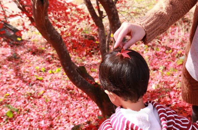 作品番号:11115006988  作品タイトル:Leaf On Head Of Child
