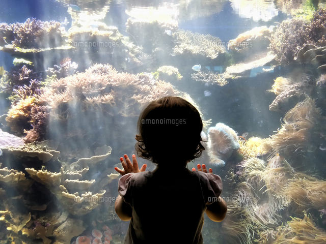 作品番号:11115029162  作品タイトル:Rear View Of Girl Looking At Corals In Fish Tank At Waikiki Aquarium