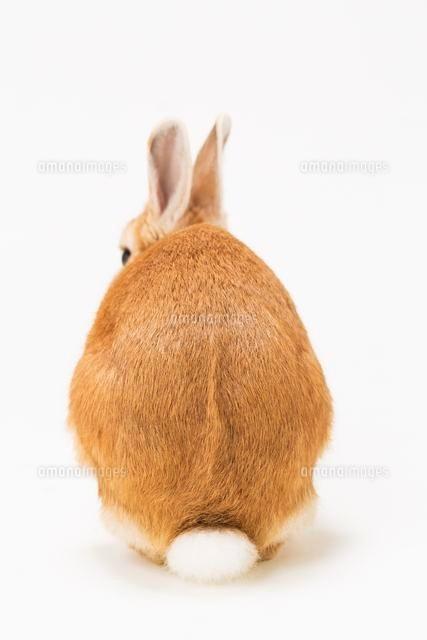 ウサギの後ろ姿28056003005の写真素材イラスト素材アマナイメージズ