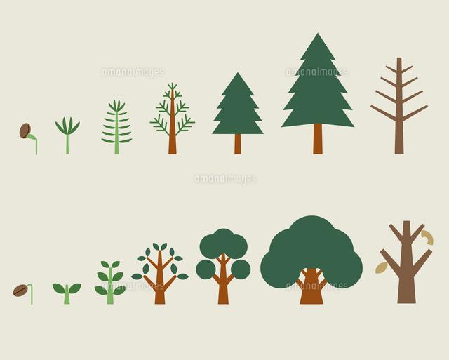 木の成長過程60000000014の写真素材イラスト素材アマナイメージズ